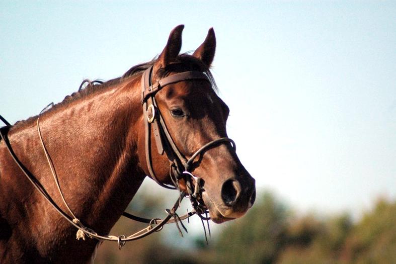 Cavalo morre eletrocutado em Alegre e dono será indenizado